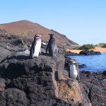 Galapagos – Park Narodowy i jego bogactwa